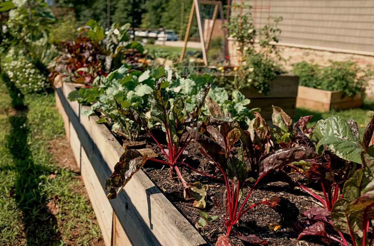 Gartengestaltung Ideen, Hochbeet kaufen, Garten Magazin