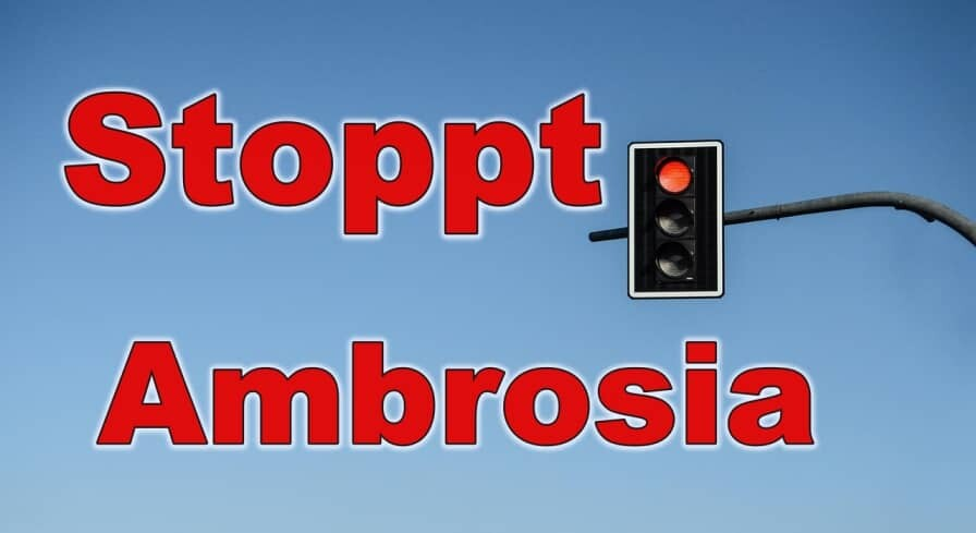 Ambrosia, Bekaempfung, Ambrosia entfernen