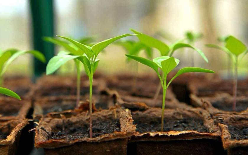 Gartenarbeiten im März, anzuchtschalen kaufen, garten magazin