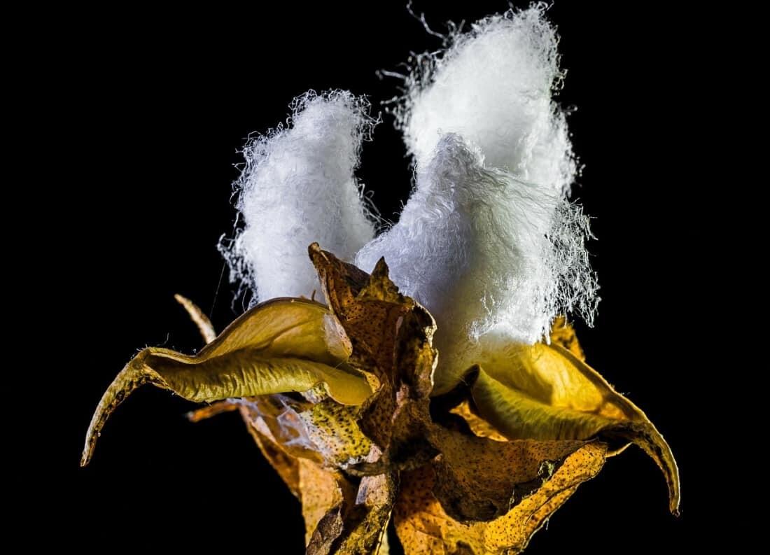 Bio Baumwolle ist die bessere Alternative, gerade bei Hautreizungen