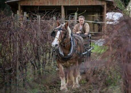 Di Filippo arbeitet mit Pferden