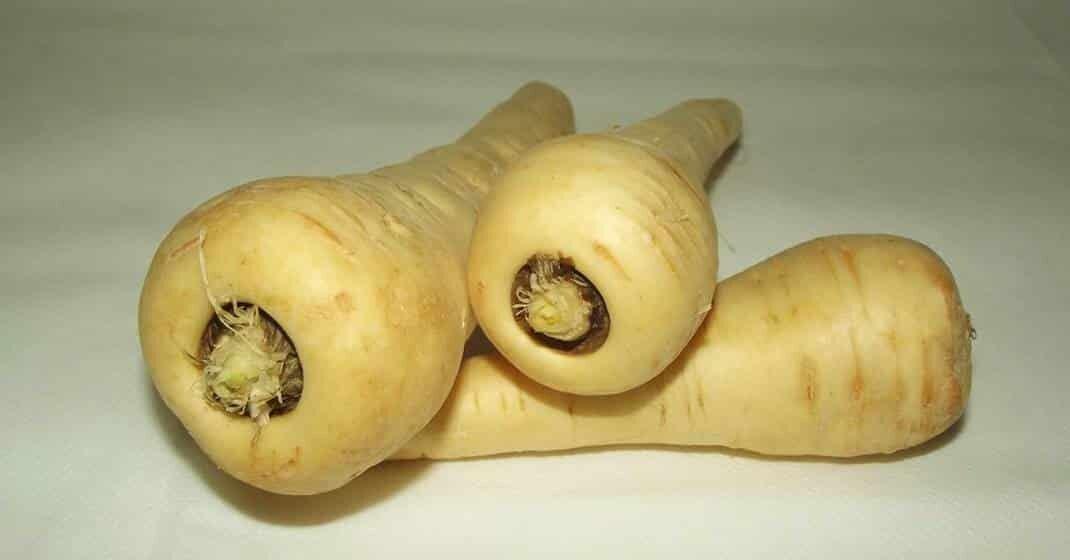 Alte Gemüsesorten Pastinaken