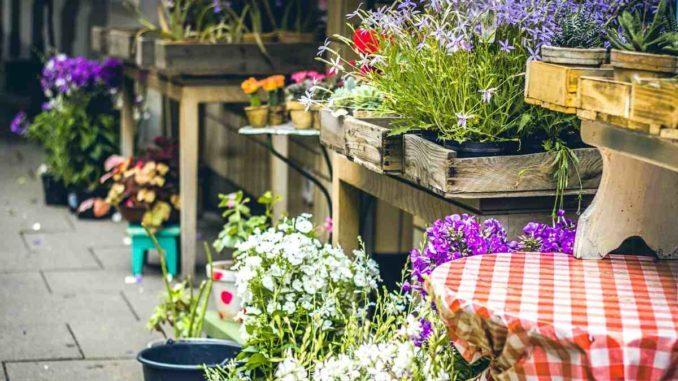Gartenarbeiten im Mai, Gemüse anbauen