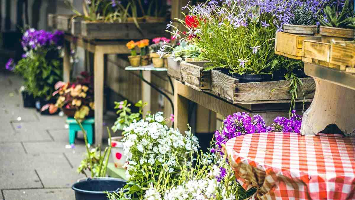 Gartenarbeiten im Mai, Gemüse anbauen, Garten Magazin