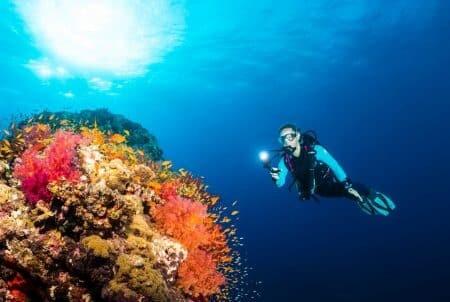 Reefcalendar
