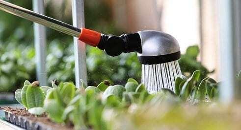 Gartenarbeit No 1 im Juli, Pflanzen gießen!