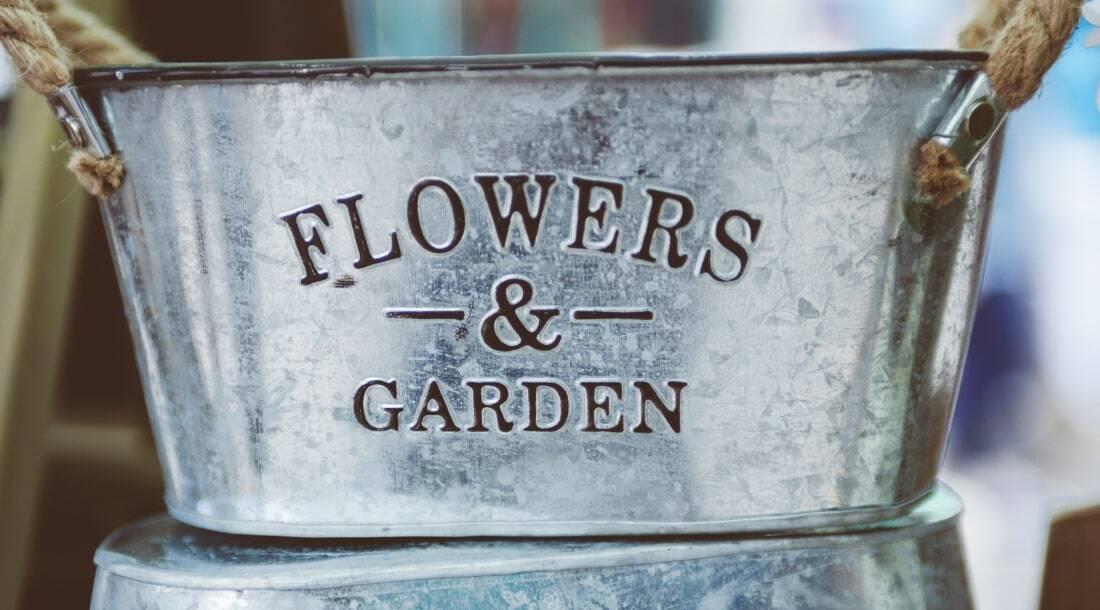 Gartenarbeit im Juni, englische Rosen Bilder