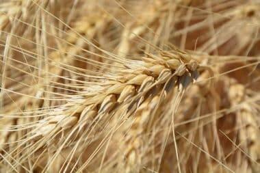 Lernen Sie die Symptome der Glutenunverträglichkeit kennen!