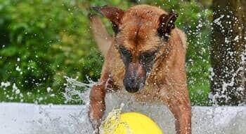 Ihr Hund im Hunde Pool!