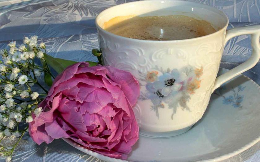 gefüllte Tulpe, Blumenzwiebel newsletter, Gartengestaltung, lifestyle magazin