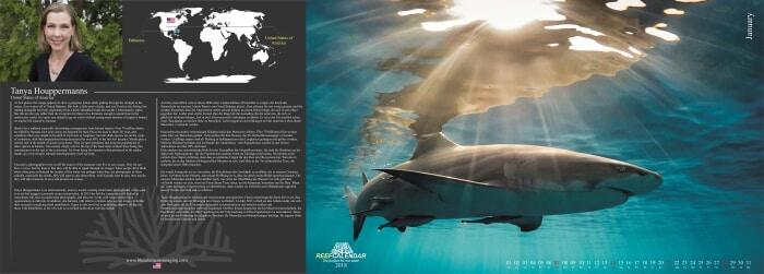 Amerikanisches Hobby: Haie fischen und sie wieder in den Ozean zurücklassen, mit Narben an Körper und Seele Photo: Tanya Houppermanns