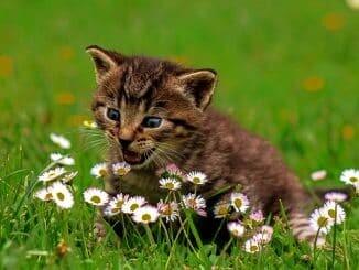 Giftige Pflanzen fuer Katzen, Gesundheit fuer Haustiere,