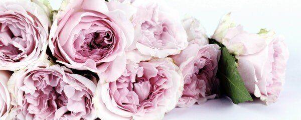 Bauerngarten anlegen, Blumen im Oktober, Rosen pflanzen,