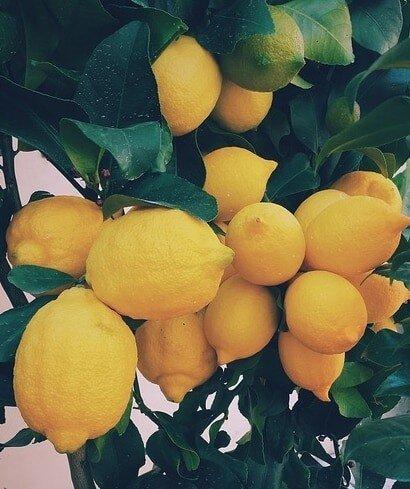 Italienischer Stil: Zitronen Hühnchen mit Salbei