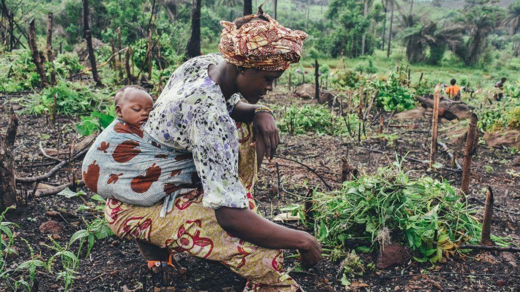 Hilfe Afrika, Bio Produkte aus Afrika, Kolumne, aktuell