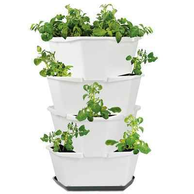 Tipp: Kartoffeln im Topf anbauen