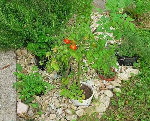 Garten gestalten, Garten Magazin, Kräuter