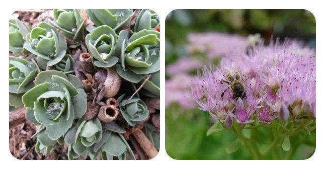 Pflegeleichte Pflanzen im Garten ohne grünen Daumen