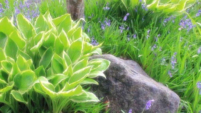 pflegeleichte Pflanzen im Garten