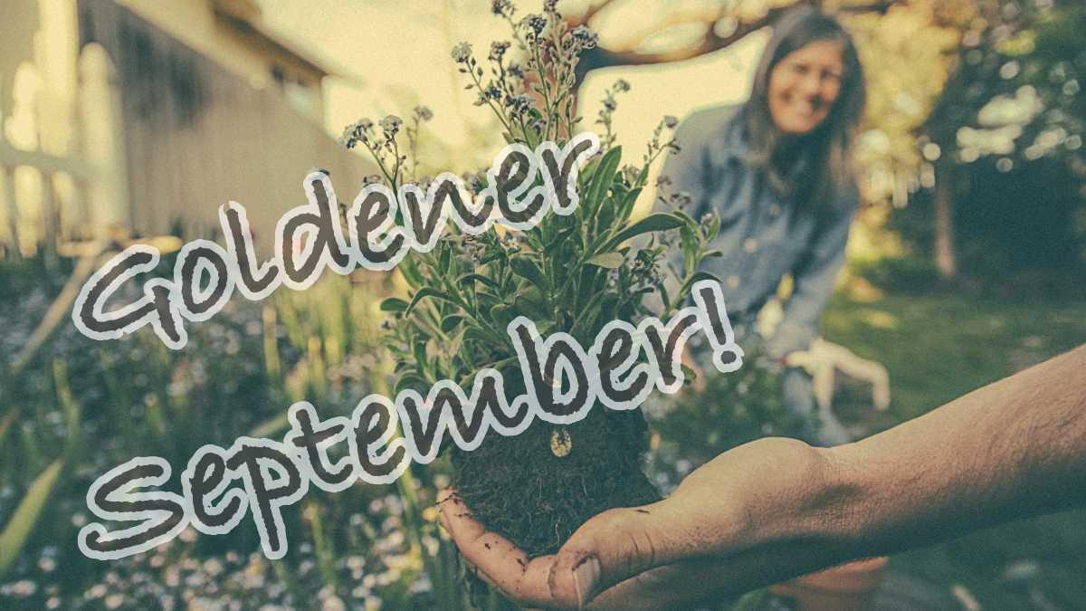 Gartenarbeiten im September, Selbstversorger, Nachhaltigkeit, Garten Magazin