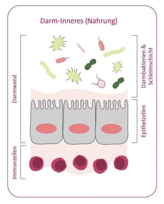 Omni-Biotic, Darmgesundheit, Lifestyle Magazin
