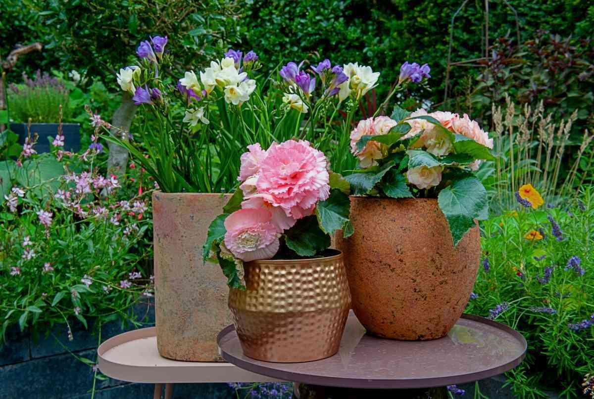 Blumen im Garten, Bilder Ideen, Garten Magazin