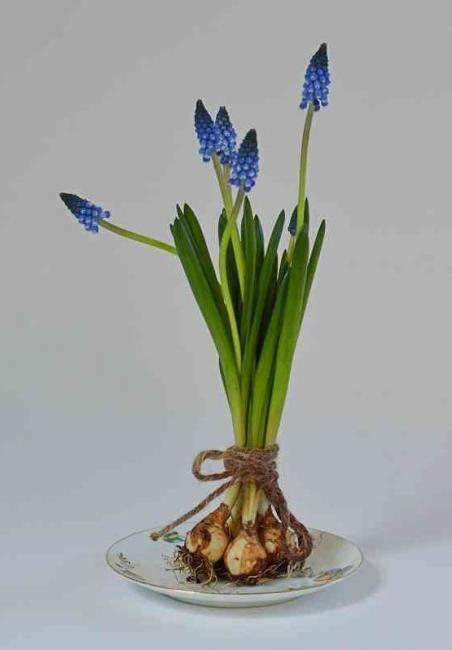 Newsletter anmelden, Garten Magazin, Blumenzwiebeln kaufen