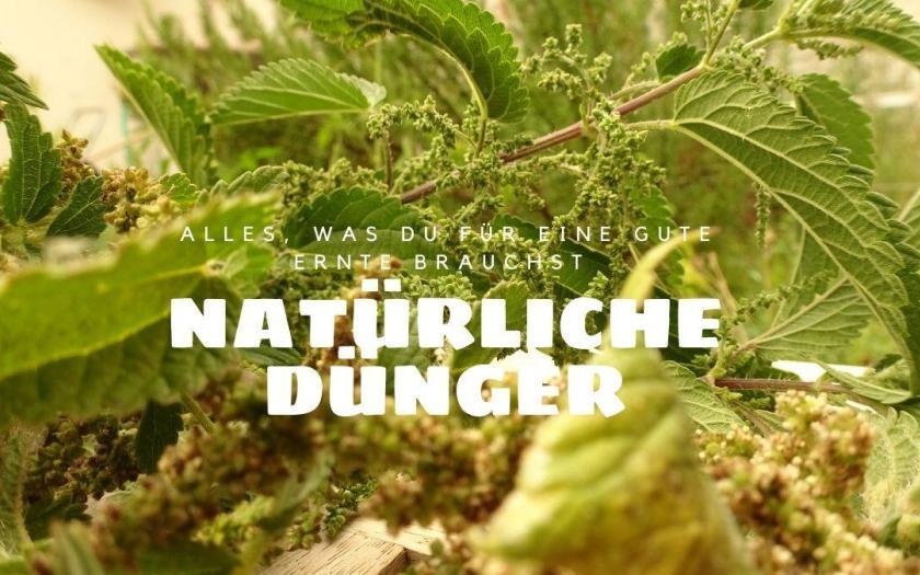 natürliche Dünger, brennnesseljuache selbst machen, nachhaltig im garten