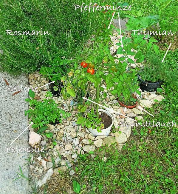 pflegeleichte Pflanzen im Garten, Kräuter im Garten, L4U Garten Magazin