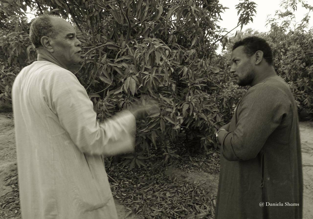 Ägypten, auf dem Land, Besprechung auf der Mangofarm