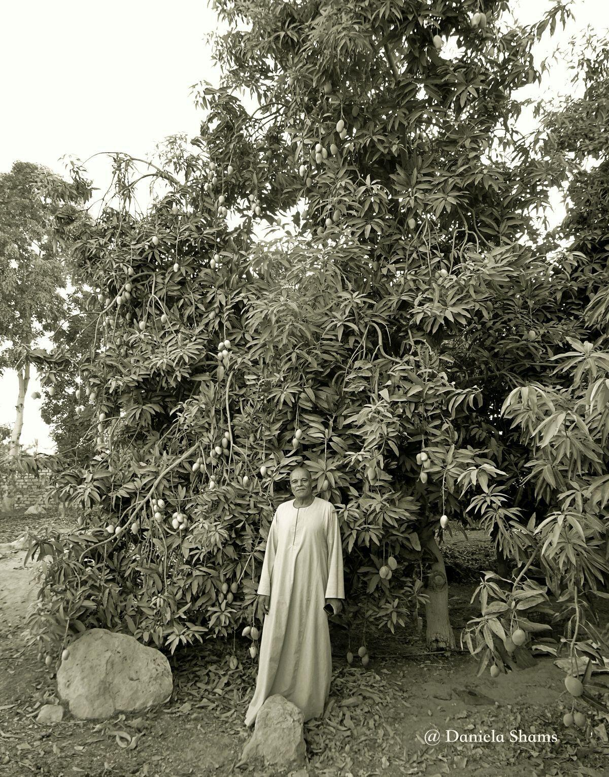 Ägypten, mangofarm, auf dem land, Reportage