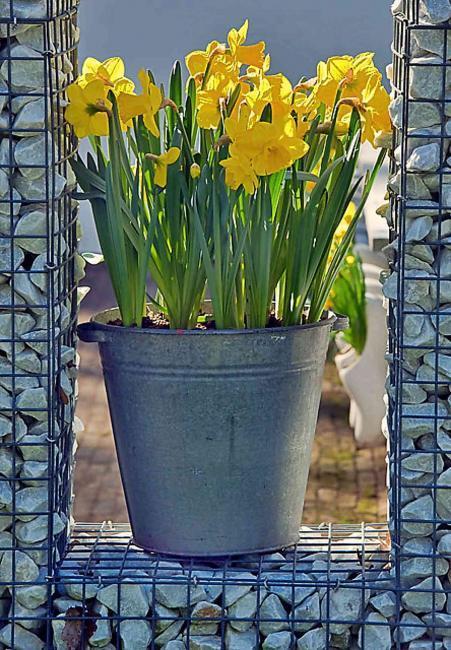 Blumenzwiebeln im Topf, Frühlingsblumen Ideen, Garten Magazin