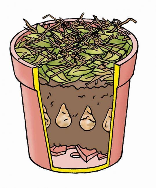 Blumenzwiebeln im Topf pflanzen, Pflanzabstand Tulpen, Pflanzen Zwiebeln kaufen, Garten Magazin
