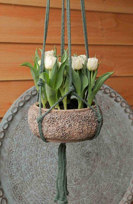 Blumenzwiebeln im topf pflanzen, Ideen für den Balkon, garten magazin